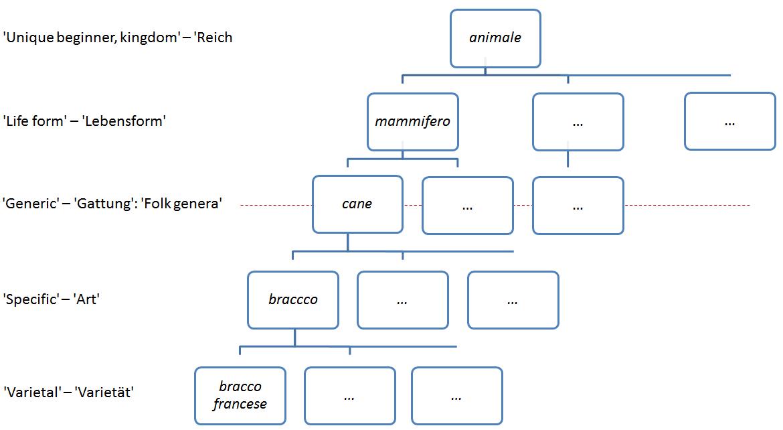 /var/cache/html/dhlehre/html/wp content/uploads/2016/12/1482161132 Hunde Hierarchie